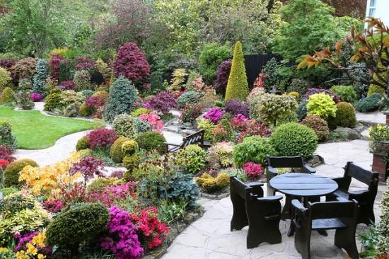 Уход за хризантемами в саду — выбор места для посадки на участке