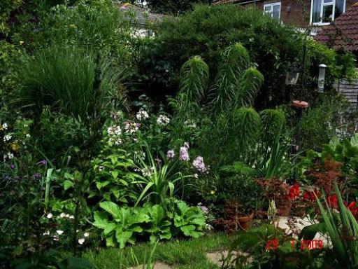 Клумба в тени у дома — особенности организации и подборка растений