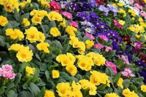 Многолетники цветущие почвопокровные для сада — как выбрать, описания