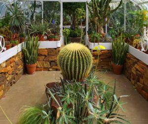 Как сделать зимний сад в частном доме — планирование и рекомендации