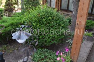 Какие вечнозеленые кустарники лучше всего подходят для сада — описание
